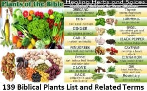 139 Biblical Plants List and Related Terms | Foods of the Bible