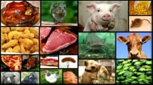 Foods of the Bible - Fish and Fowl