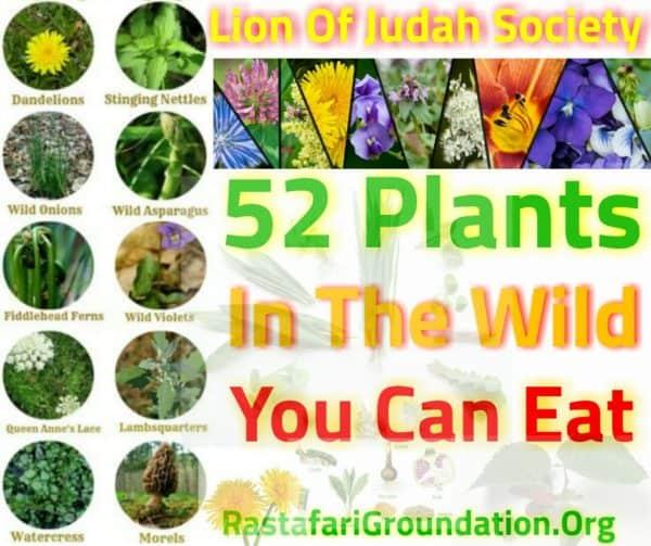 RastafariGroundation-Plants