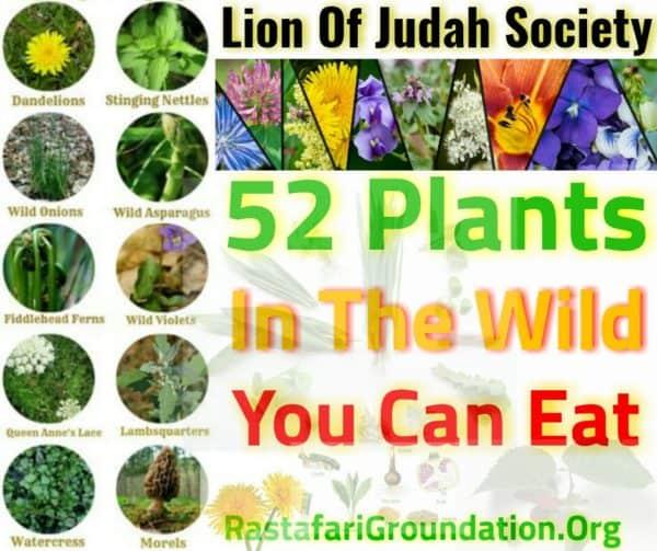 RastafariGroundation-Plants2